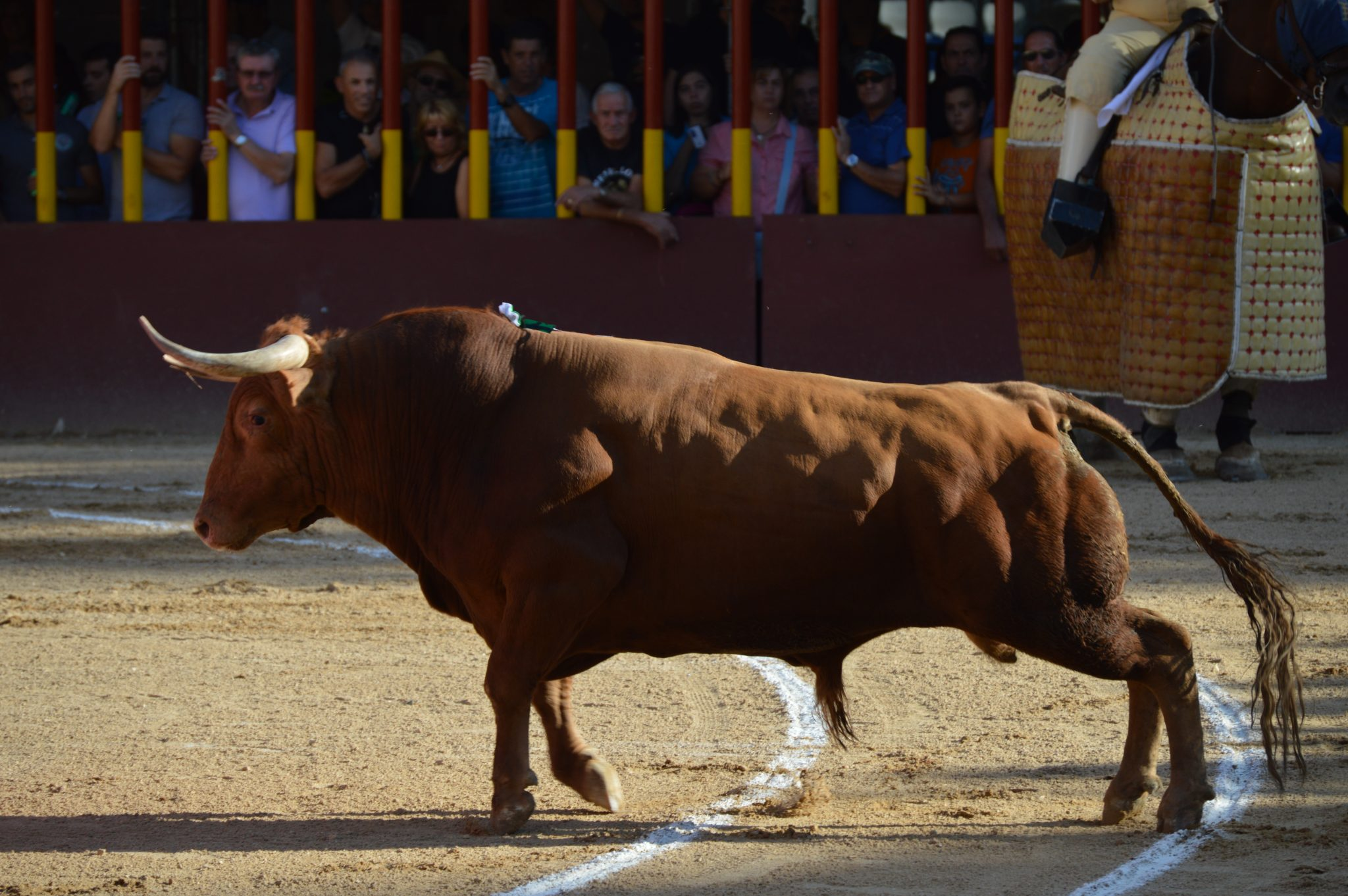 Madrid Capeas bull running