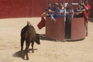 baby bull running campotoro.es