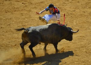 CampoToro Bull Leapers Demonstration