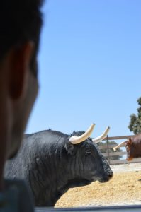 Bullfighting Madrid Tour