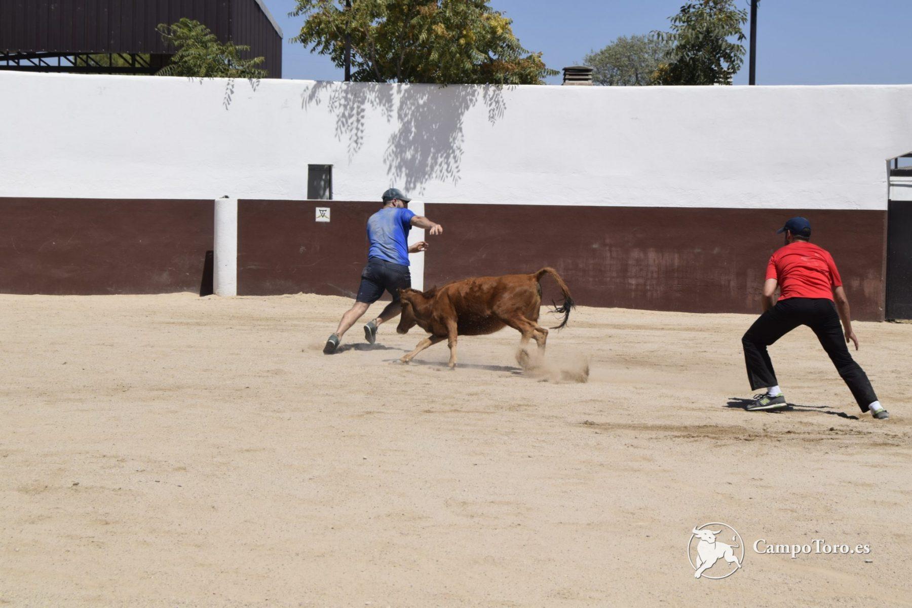 Like a bullfighter