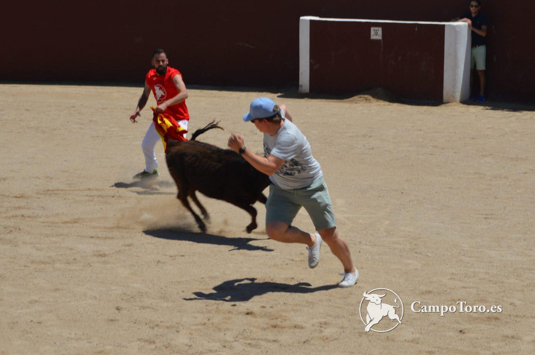 Face the bull