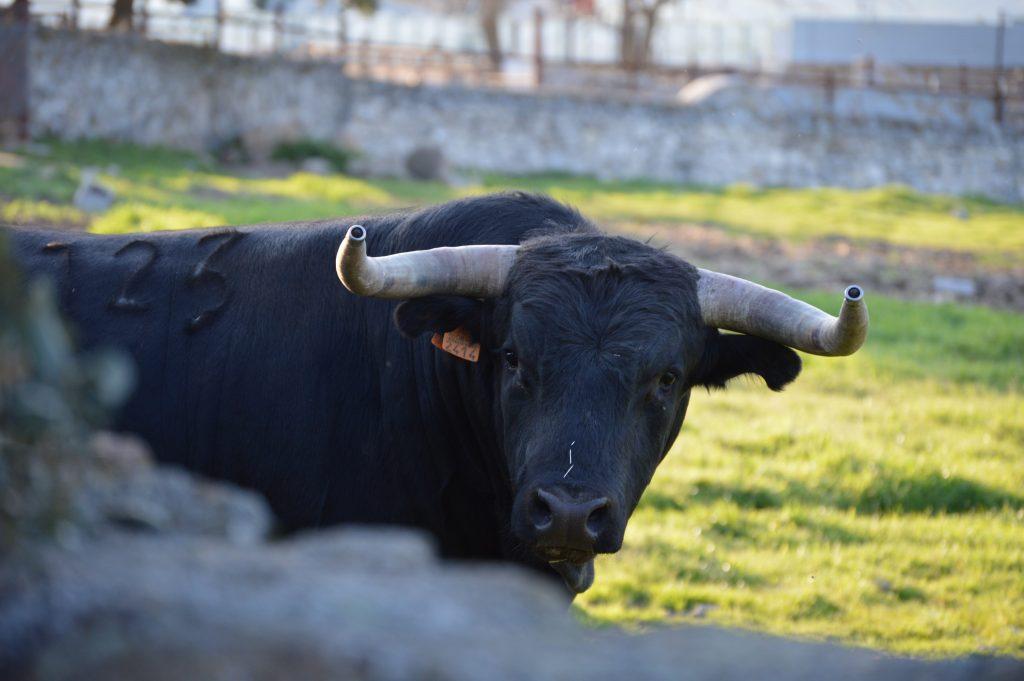 bull culture madrid