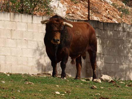 visit bull ranch