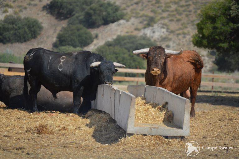 Visita una ganadería brava en Madrid