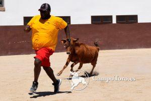 bullfight Madrid experience