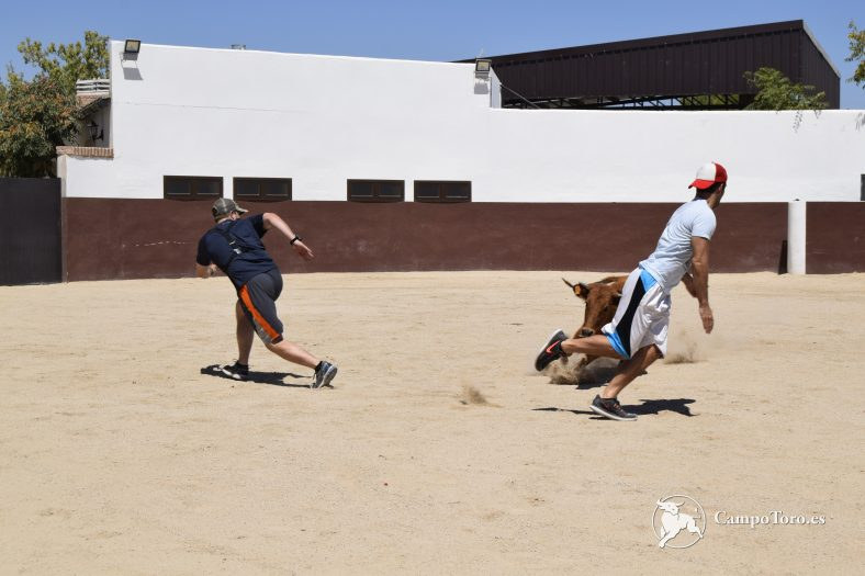 Madrid bullfight experience