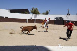 Madrid Bull stag do