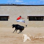 Madrid Bull Leaping