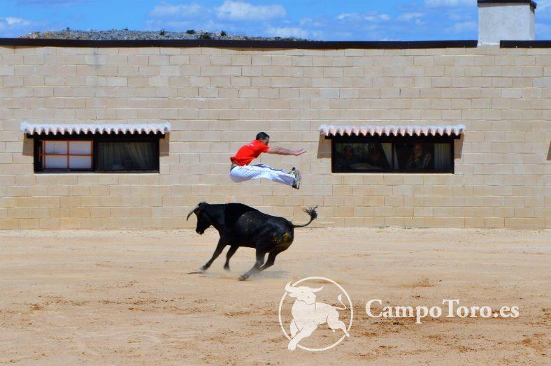 Madrid Bull Leaping