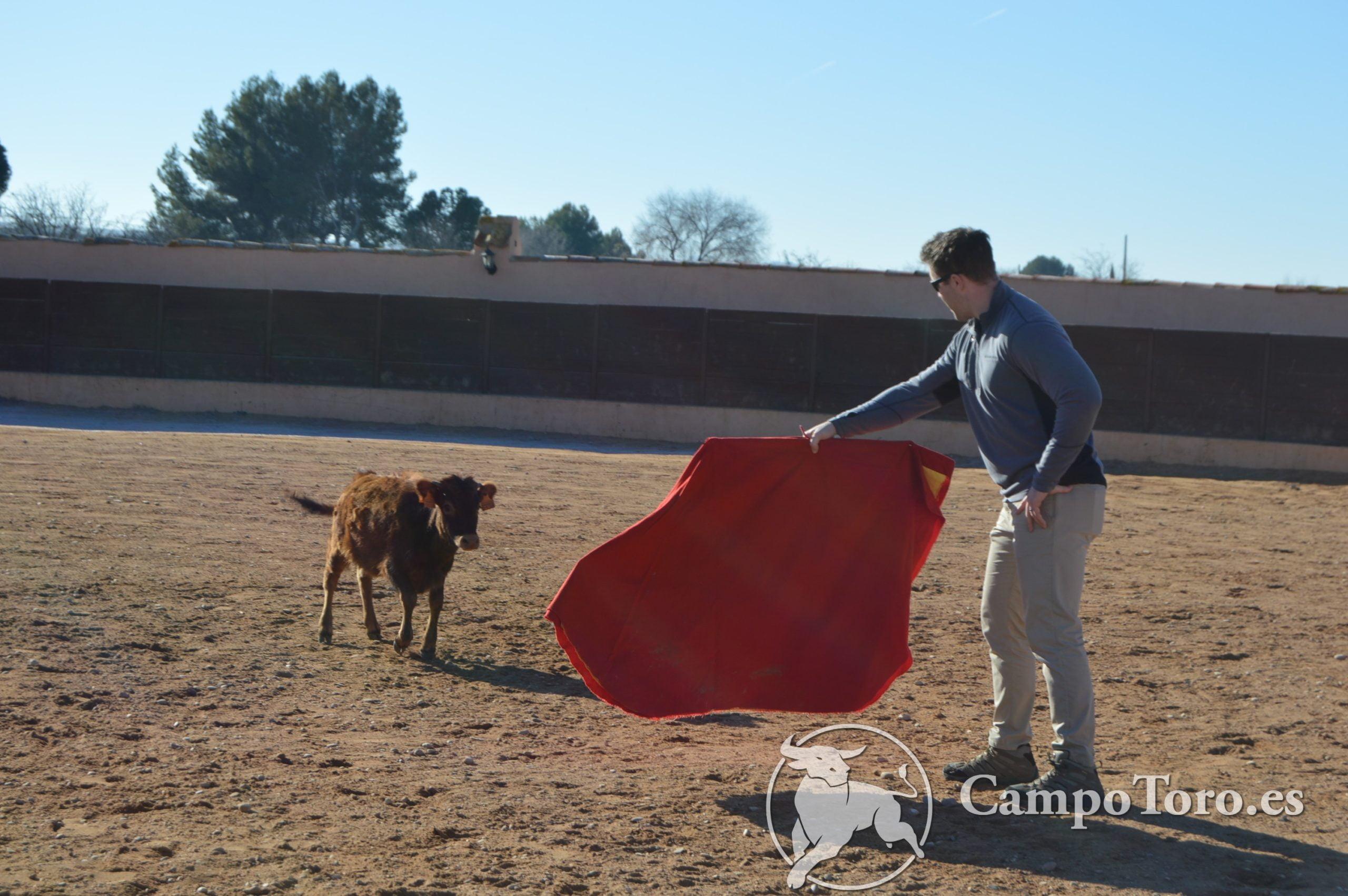 how to baby bull running