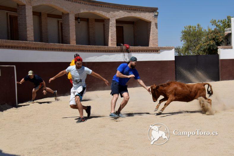 Baby bull running Madrid