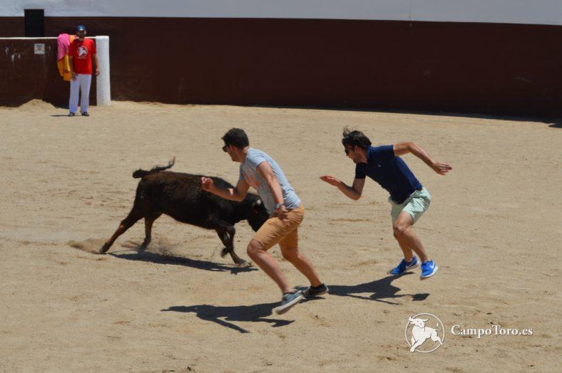 Stag Madrid