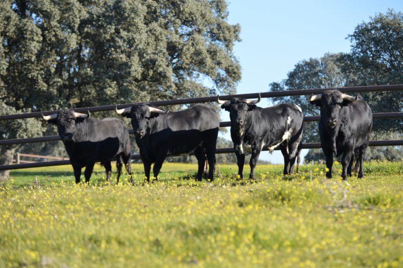 bullfight family tour