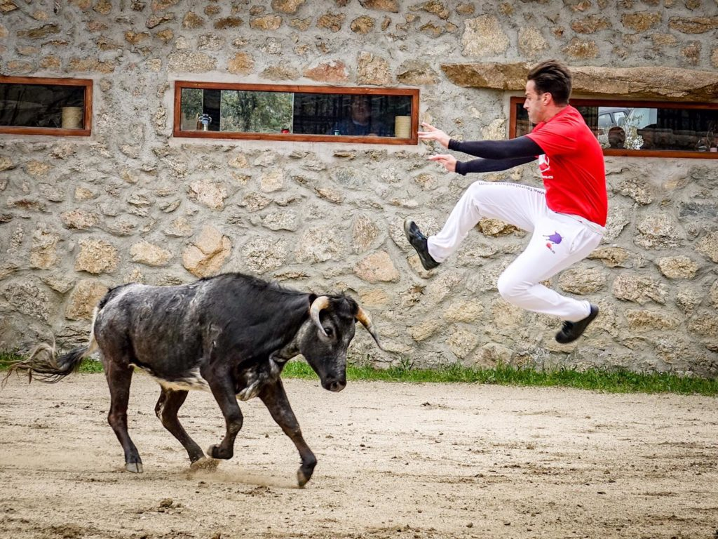 Bullfight demonstration
