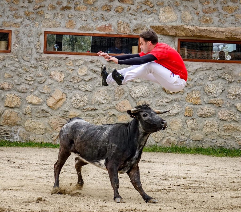 Bull leaping Madrid