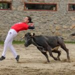 Baby bull running