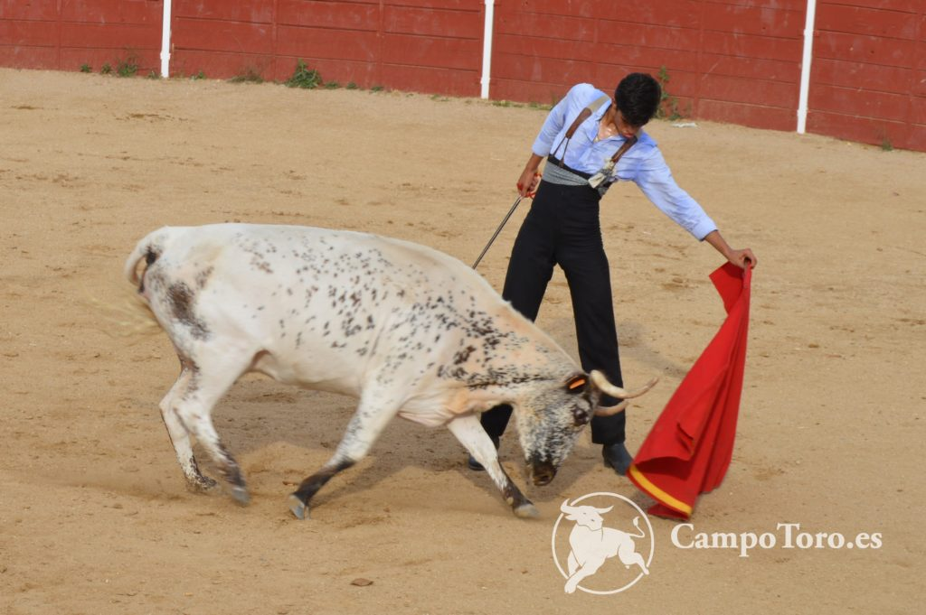 Bullfighting Experience Madrid