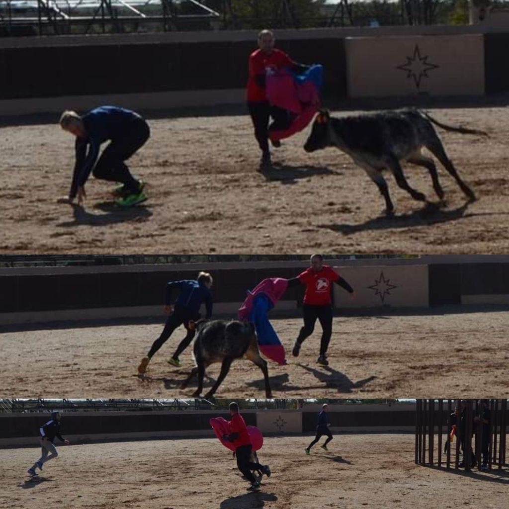 Bayb bull running