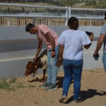Family Bullfight Tour