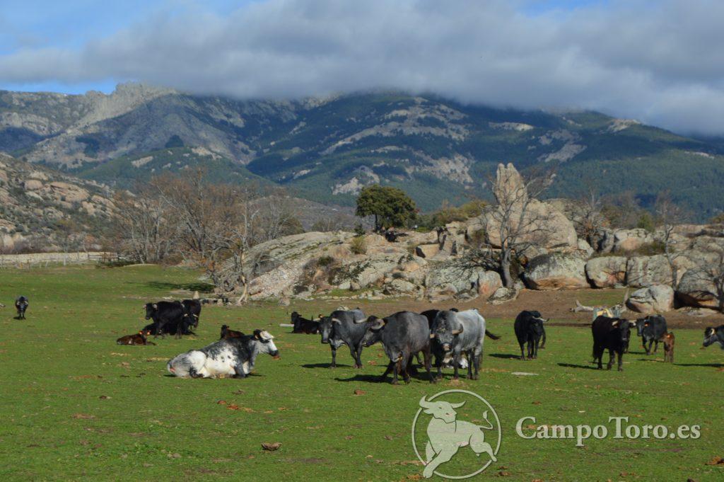 Madrid Toros