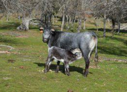 Brave bull ranch Madrid